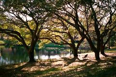 The Park (Reney L) Tags: dunedin florida scotsdale park