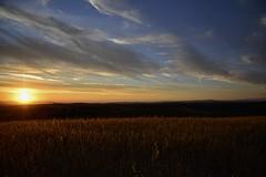 Summer.. finally! (Antonio Cinotti ) Tags: landscape paesaggio toscana tuscany italy italia siena hills colline campagnatoscana cretesenesi asciano nikond7100 nikon d7100 nikon1685 summer sunset countryside monteoliveto