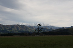 Peel Forest (ambodavenz) Tags: new two mountain forest landscape south scenic canterbury zealand thumb peel range