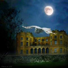 Silence of the night (Lemon~art) Tags: moon house tree bird night dark nocturnal flight surreal manipulation oldhouse silence owl photomontage moonlight hunter manorhouse