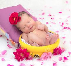 Sweeter than Honey (Don Komarechka) Tags: flowers roses portrait baby honey newborn