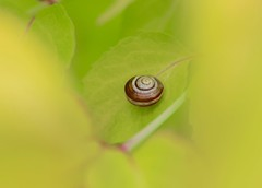 Lazy hazy.... (Kez West) Tags: summer nature leaves yellow spiral snail hss snailsaturday