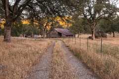 RHM_2509-1539.jpg (RHMImages) Tags: california road trees foothills field barn fence landscape us nikon unitedstates trail sierranevada grassvalley nevadacounty d810 dogbarroad