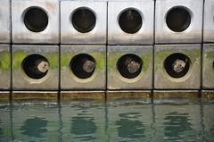 "Circles ! (CJS*64 ""Man with a camera"") Tags: vacation holiday abstract colour nikon harbour circles holes nikkor dslr madeira funchal nikkorlens d7000 nikond7000 craigsunter cjs64"