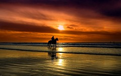 the sea cowboy (Lior. L) Tags: sunset sea sky horse reflection beach nature silhouette cowboy horseman theseacowboy