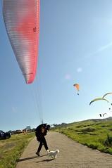 Me voy contigo (dgomez_h) Tags: sea sky dog cute mar flying perro cielo paragliding bizkaia euskalherria euskadi vizcaya basquecountry paisvasco owner parapente paraglide sopelana biscay dueño parapentes