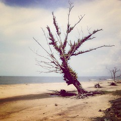#beach #sand #sky #trees #banjarmasin (_pwekokjrot_) Tags: square squareformat poprocket iphoneography instagramapp uploaded:by=instagram