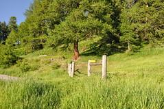 Wierliwäg Giw/Niwe (Heidadorf Visperterminen) Tags: schweiz sommer urlaub berge zermatt matterhorn wallis wandern heida tourismus valais wein weinberg wanderweg sesselbahn bietschhorn visperterminen heidadorf heidawein