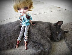 The Zombie Victim's Victim! (*NatTheCat*) Tags: cat doll bob pullip custom zombievictim myufish missmandylynne