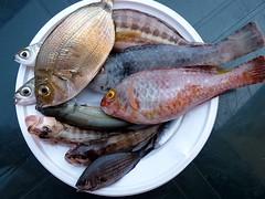 Taormina - La seconda volta di Patty00 (Luigi Strano) Tags: fish animals sicily sicilia messina pesce sicile sizilien италия европа сицилия таормина