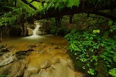 Cascadelle sur le Ruisseau du Creux Lague - Blegny (francky25) Tags: du jura le sur franchecomté doubs ruisseau creux blegny lague cascadelle