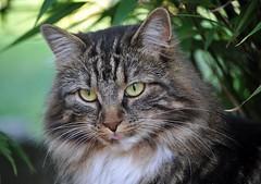 Freiheit ist,....... (SpitMcGee) Tags: pet cat freedom katze lizzi freiheit inmygarden hauskatze inmeinemgarten zuckerschnecke spitmcgee alittlebeauty friedrichnitzsche coth5
