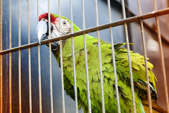 """A happy bird in the cage"" (