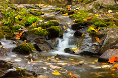Emerald Aisle (Boreal Bird) Tags: duluth lakesuperior autumnstream amitycreek myfavoriteshadeofgreen emeraldaisle
