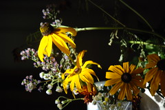 BLACK-EYED SUSANS IN THE EVENING SUN (photodittmer) Tags: flowers autumn light black fall yellow sidelight