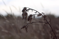 (Sarah Belin) Tags: winter cold nature canon vent eos 50mm countryside wind hiver campagne froid 50mmf18 1000d