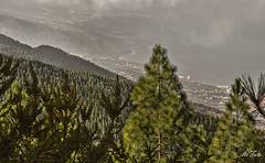 Tenerife costa norte (letrucas) Tags: españa spain tenerife canaryislands pinares islascanarias pinuscanariensis valledelaorotava isladetenerife costanortedetenerife leandrotrujillocasañas
