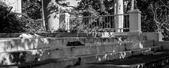 Cuba #23 (husonline) Tags: voyage trip summer vacation panorama holiday seascape tour escape sommer urlaub landmark daily adventure independent journey rest leisure sight tune landschaft idyllic freizeit hus hs reise routine harmonie sehenswrdigkeit idyllisch recovering erholung panoroma unabhngig abenteuer harmoniousness meereslandschaft alltagsflucht