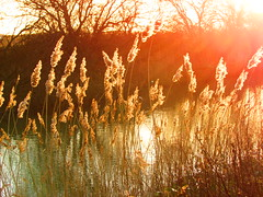 Last Sun Of The Day (Gary Chatterton 2.6 Million Views , Thank You All) Tags: light sunset red sun sunlight nature reeds evening flickr canals burn redsky northyorkshire canonpowershot selby exploreinteresting blinkagain