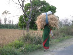 Khangar_woman_carrying_wheat