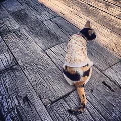 ปีโป้เหม่อ... Pepo the cat... #cat #pet #thailand