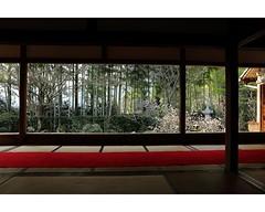 京都,寶泉院,P_大原28