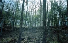 (beccachairin) Tags: statepark park trees film nature wisconsin analog forest 35mm spring woods kodak hiking wide wideangle olympus hike xa2 olympusxa2 portra doorcounty peninsulastatepark spring2014