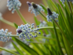 flower (kathi_ober) Tags: plant flower macro green nature purble