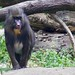 """Monkey • <a style=""""font-size:0.8em;"""" href=""""http://www.flickr.com/photos/128593753@N06/15916787903/"""" target=""""_blank"""">View on Flickr</a>"""