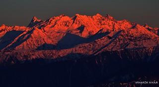 Golden Himalaya (Explored)