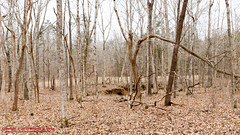 Mousetail Landing SP & Lady's Bluff - January 31, 2015 (mikerhicks) Tags: winter usa geotagged unitedstates hiking tennessee linden springcreek tennesseestateparks mousetaillandingstatepark sigma18250mmf3563dcmacrooshsm mousetailhistorical canoneos7dmkii geo:lat=3567338333 geo:lon=8800371500