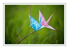 Origami 8/52 (keikoellis) Tags: origami crane wish borderfx