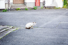Today's Cat@2016-05-13 (masatsu) Tags: cat pentax catspotting mx1 thebiggestgroupwithonlycats