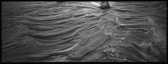 xpanDelta007 (Loren Sanz) Tags: bw blancoynegro film landscape blackwhite spain dunes dune hasselblad apx100 pelicula xpan analogphotography dunas hasselbladxpan onlyfilm