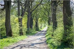The Way . (:: Blende 22 ::) Tags: trees sun green canon germany deutschland thüringen spring alley path thuringia rays grün sonne bäume sonnenstrahlen weg frühling allee eichsfeld canoneosd canoneos5dmarkii