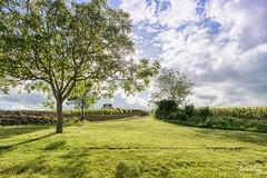Vignoble Murisaltien (Sabrina Vosgien) Tags: blue sky cloud tree green landscape juin nikon vert bleu ciel d750 nuage tamron bourgogne arbre hdr meursault 2470mm28 acrofoto