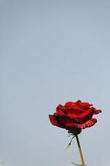 20160522-D7-DS7_2569.jpg (d3_plus) Tags: park street sky plant flower nature japan garden walking drive tokyo nikon scenery bokeh fine daily bloom   nikkor   kanagawa   dailyphoto touring     thesedays  fineday  jindaiji          d700 kanagawapref nikond700