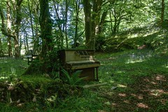 Forest Music (dilys_thompson) Tags: wood old trees music green broken forest woods decay piano disused decaying