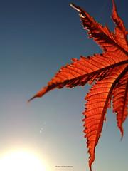 Lonely day (LviaVieitoLT) Tags: sky sun sol nature nikon natureza cu negativespace espaonegativo