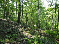 Rocky slope (pilechko) Tags: trees color green outdoors woods pennsylvania newhope bowmanshill