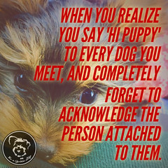 Does this ever happen to you, or is it just me? (itsayorkielife) Tags: yorkiememe yorkie yorkshireterrier quote