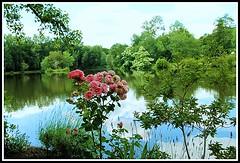 Un petit coin de nature (Les photos de LN) Tags: nature fleurs lac miroir paysage parc reflets calme berges vgtation srnit rosier