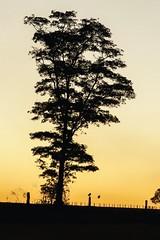 Corujas (pmenge) Tags: contraluz sp árvore corujas pds g7x