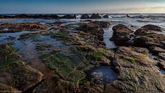 Green life (Andres Puiggros) Tags: ocean chile sea atardecer mar waves olas rocas negras arica filtros arenillas