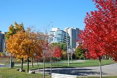 fall_252 (Sascha G Photography) Tags: autumn trees toronto color tree fall leaves leaf nikon seasons waterfront lakeshore indiansummer d60