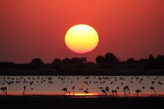 Kutch, Lakes & Ponds, Little Rann of Kutch, Sunset-Sunrise, Dec 2012-3 (Peter R Steward) Tags: 4environment 6places freshwatersealochs gujurat india kutch lakesponds littlerannofkutch sky sunsetsunrise exif:focallength=500mm camera:make=canon exif:lens=150500mm camera:model=canoneos550d exif:model=canoneos550d geolocation exif:isospeed=800 exif:aperture=80 exif:make=canon