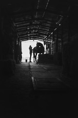 Family (GiuliaCibrario) Tags: family horses blackandwhite horse dog white black dogs natura campagna grooming e stable cavalli cavallo bianco nero bianconero countrylife contry