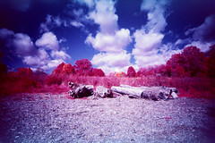 FPP 35mm Color Infrared / Ultra Wide & Slim (Michael Raso - Film Photography Podcast) Tags: ultrawideslim infraredfilm pomptonlakesnj fppinfrachromecolorinfraredfilm