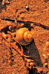 "The Snail Shell • <a style=""font-size:0.8em;"" href=""http://www.flickr.com/photos/12031443@N02/27493676366/"" target=""_blank"">View on Flickr</a>"