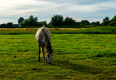 Grey (Eduard van Bergen) Tags: road winter friends horses snow plant holland guy beach water netherlands girl field grass station animal lady swimming radio river walking landscape denmark cheval happy living photo amazon friend long mare alone time outdoor sony coat flash border navy nederland meadow riding seal serene flashing dame dijk grassland habitat past chevalier bas pferde pays equestrian horseback navigation colt stallion lek niederlande endless emptyness chevaux hyperbolic decca achthoven rosse hipico horsewoman middelwaard voal zederik hippisch hifix
